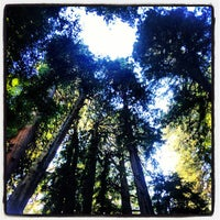 Photo taken at Muir Woods National Monument by Sandra F. on 8/14/2013