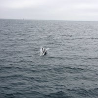 Photo taken at Elding Whale Watching by Alex N. on 6/14/2013