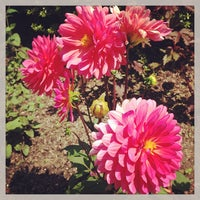 Photo taken at Central Park - Conservatory Garden by Nicholas F. on 6/9/2013