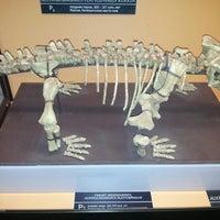 Снимок сделан в Вятский палеонтологический музей пользователем meshka m. 6/25/2013
