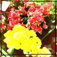 Photo taken at Dolin's Garden Center by Krista M. on 3/23/2013