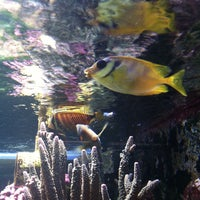 Photo taken at Aquarium City by Amy G. on 6/29/2013