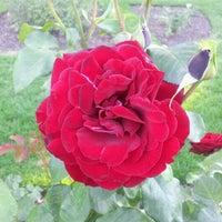 Photo taken at Julia Davis Rose Garden by Laura R. on 10/1/2012