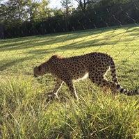 Photo taken at Cincinnati Zoo & Botanical Garden by Jeremy L. on 9/16/2012