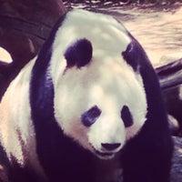 Photo taken at Giant Panda Research Station by Brandon E. on 6/6/2014