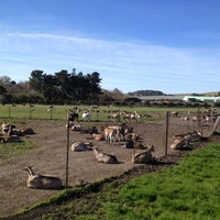 Photo taken at Harley Farms by Elena G. on 1/21/2013