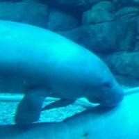 Photo taken at Cincinnati Zoo & Botanical Garden by Cheina Curvaciousdiva D. on 10/13/2012
