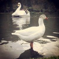 Photo taken at Lago Negro by Ronan d. on 5/25/2013