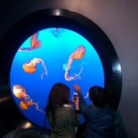 Photo taken at Vancouver Aquarium by Brunno C. on 3/23/2013