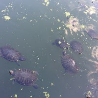 Photo taken at Central Park – Turtle Pond by Dawnie N. on 6/29/2013