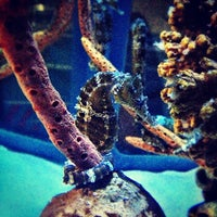 Photo taken at Sealife Centre by Harry W. on 10/6/2012