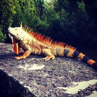 Photo taken at Vizcaya Museum and Gardens by artemisrex on 12/29/2012