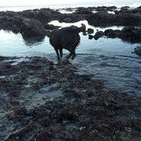 Photo taken at Amarillo Beach by Sophia on 1/2/2013