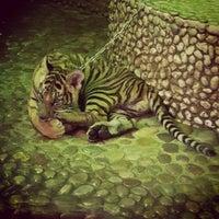 Photo taken at The Million Years Stone Park & Pattaya Crocodile Farm by Mishka V. on 2/5/2013