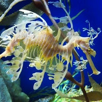 Photo taken at Aquarium of The Pacific by Shelya J. on 3/3/2013