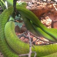 Photo taken at San Antonio Zoo by Callie on 4/7/2013