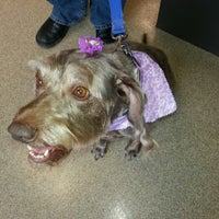 Photo taken at Blue Springs Animal Hospital by Stormy L. on 2/14/2013