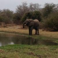 Photo taken at Lower Sabie Rest Camp, Kruger National Park by Cois d. on 7/8/2013