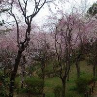 Photo taken at ヤエザクラの原っぱ by wildcat on 4/4/2015