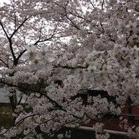 Photo taken at 南蔵院 by Yumiko N. on 3/24/2013