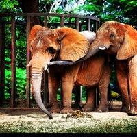 Photo taken at Zoo Miami by Elizabeth on 11/2/2012