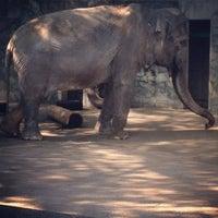 Photo taken at Inokashira Park Zoo by masa on 5/6/2013