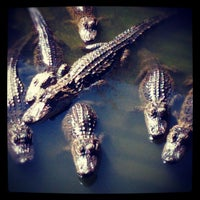 Photo taken at Gatorland by twobillionideas on 10/21/2012