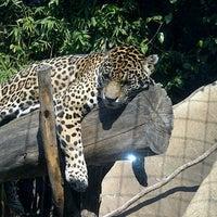 Photo taken at Zoológico de Chapultepec by EliSa C. on 12/15/2012