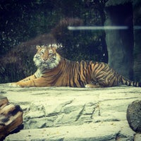 Photo taken at Zoológico de Chapultepec by aspirina911 a. on 4/25/2013