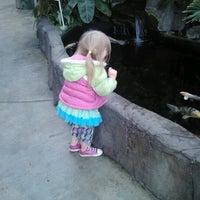 Photo taken at Swansons Nursery by Kristin B. on 10/23/2012