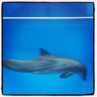 Photo taken at Dolphin Show by Peter B. on 4/8/2013