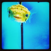 Photo taken at Petco by Tochtli G. on 6/29/2013