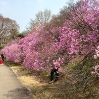Photo taken at Yonsei University by Jiho P. on 4/13/2013
