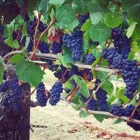 Photo taken at Pellegrini Family Vineyard by Tony L. on 7/30/2015
