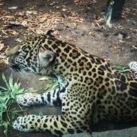 Photo taken at Zoológico de Chapultepec by Ilian J. on 3/30/2013
