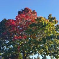 Photo taken at Charleson Park by Matt C. on 10/11/2016