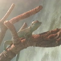 Photo taken at Reptile House by Neil F. on 12/30/2012
