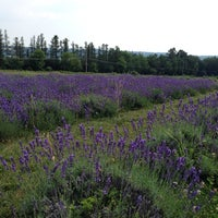Photo taken at Lockwood Lavender Farm by Tracy M. on 7/12/2014