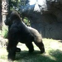 Photo taken at Zoológico de Chapultepec by Karen R. on 5/8/2013