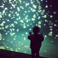 Photo taken at Vancouver Aquarium by Meri K. on 5/29/2013