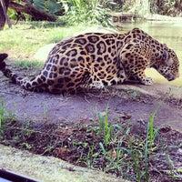 Photo taken at Gramado Zoo by Danielle A. on 5/3/2013