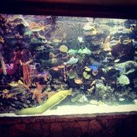 Photo taken at The Mirage Aquarium by Justin B. on 12/19/2012