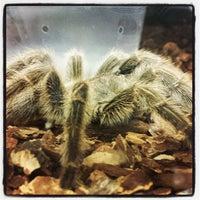 Photo taken at PetSupermarket by BoogieTek P. on 5/11/2013