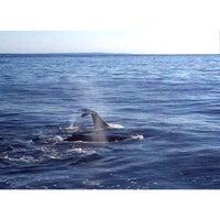 Photo taken at Boston Harbor Whale Watch by cartoonztnz w. on 8/25/2014
