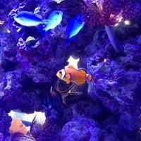 Photo taken at Tee Jay Thai Sushi by Jennifer L. on 4/4/2013