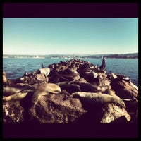 Photo taken at Sea Lion Observatory Deck by Alesya T. on 11/9/2012