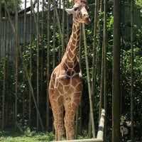 Photo taken at Audubon Zoo by Meredith B. on 5/25/2013
