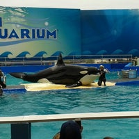 Photo taken at Miami Seaquarium by Paola R. on 6/6/2013