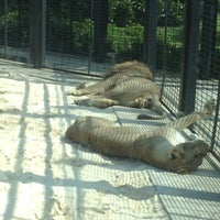 Photo taken at George H. Carroll Lion Habitat by Nikko S. on 7/2/2013
