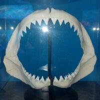 Photo taken at Sea Life Aquarium by Sara K. on 5/28/2013